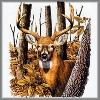 Head Shot Buck Deer T-Shirt