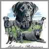 Black Labrador Retriever tees