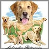 Yellow Labrador Retriever tees