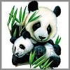 Mother and Cub Panda bamboo tee shirt